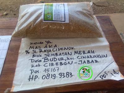 Benih pesanan MAS AKA Cirebon, Jabar   (Sebelum Packing)