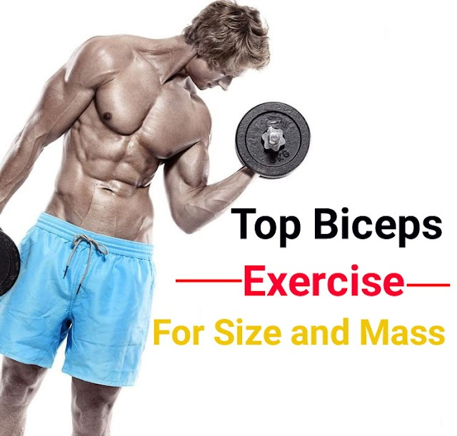 Biceps workouts for size and mass