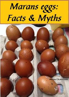 Black copper Marans eggs myths