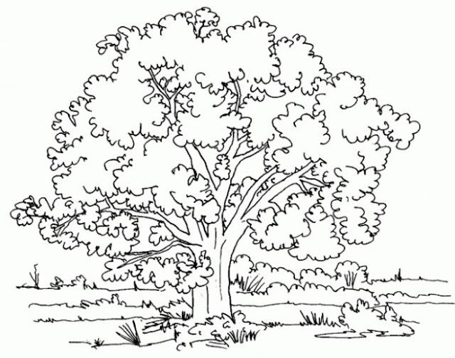 صورة شجرة للتلوين