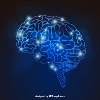 neurony, układ nerowowy