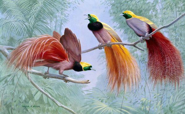 Gambar Flora Dan Fauna Adreff