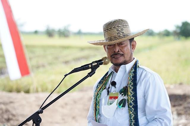 Seluas 2.875 Hektare Tanaman Padi di Food Estate Kalteng Telah Dipanen
