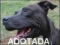 http://oscaesdoparque.blogspot.com.br/2013/04/postagem-r-122.html