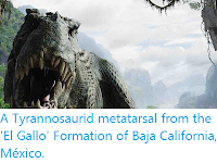 http://sciencythoughts.blogspot.co.uk/2012/10/a-tyrannosaurid-metatarsal-from-el.html