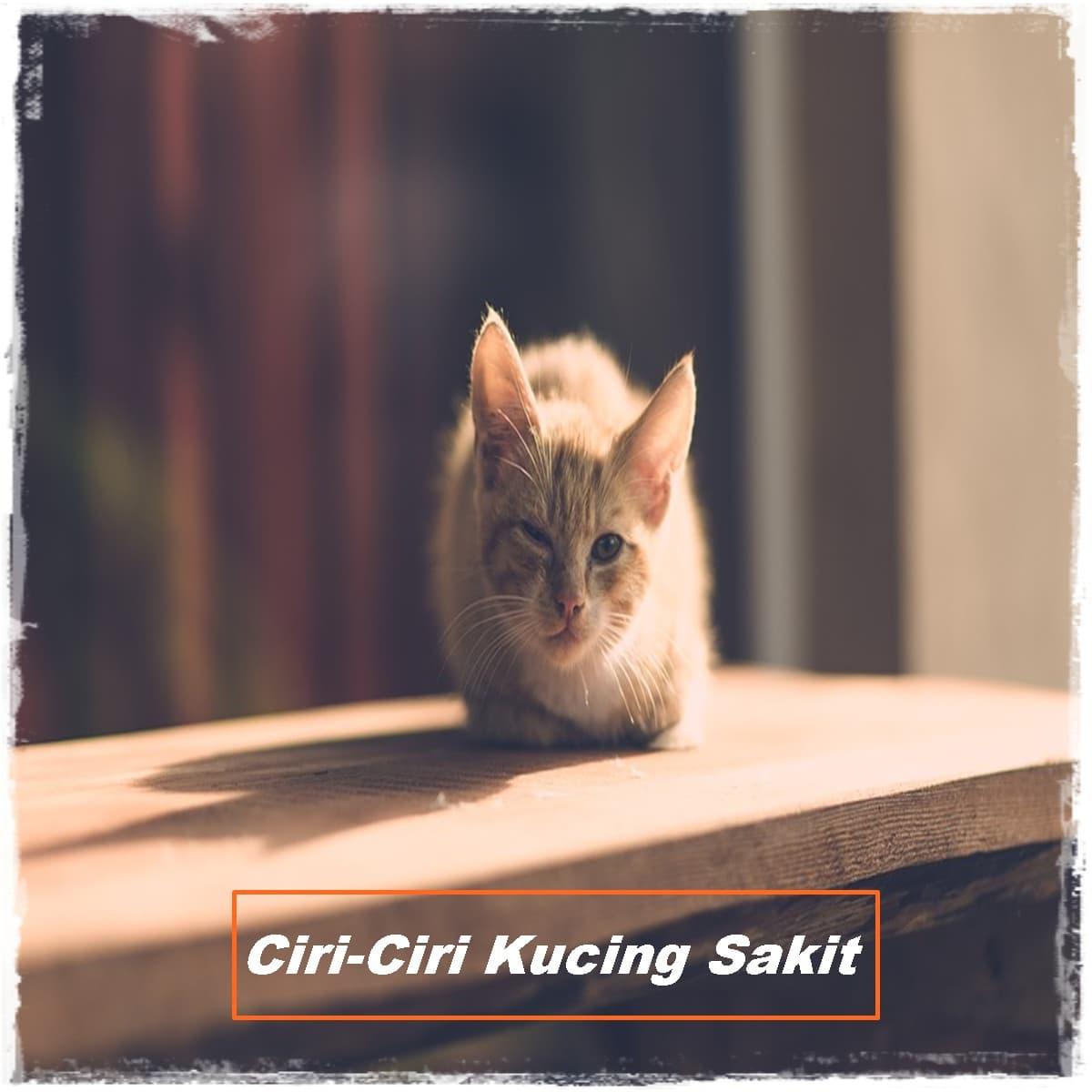 13 Ciri-Ciri Kucing Sakit yang Perlu Anda Ketahui