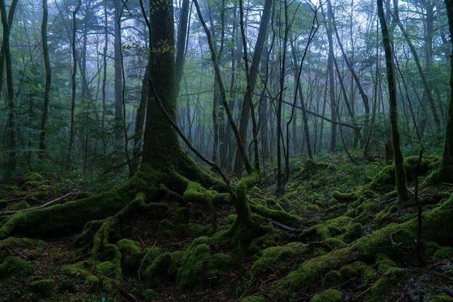 Aokigahara, floresta do suicídio