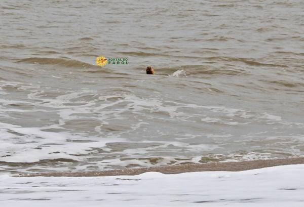 Tartaruga-cabeçuda é monitorada após comportamento incomum à beira-mar na praia do Farol