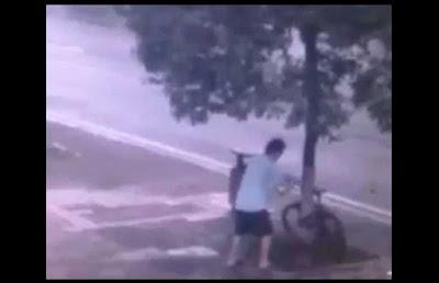 Ladrao corta arvore para roubar bicicleta
