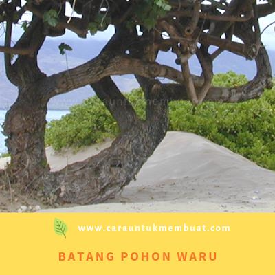 Batang Pohon Waru