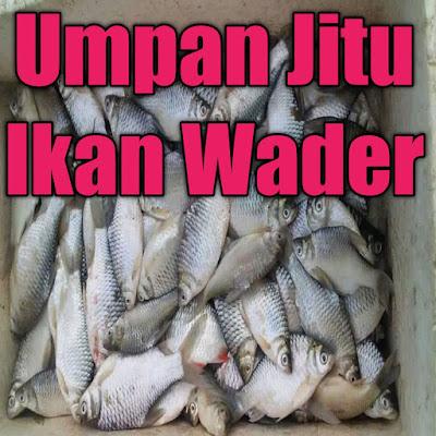 umpan jitu ikan wader yang banyak di gunakan oleh para pemancing dapat banyak ikan wader sungai, ikan wader air keruh dan ikan wader besar babon