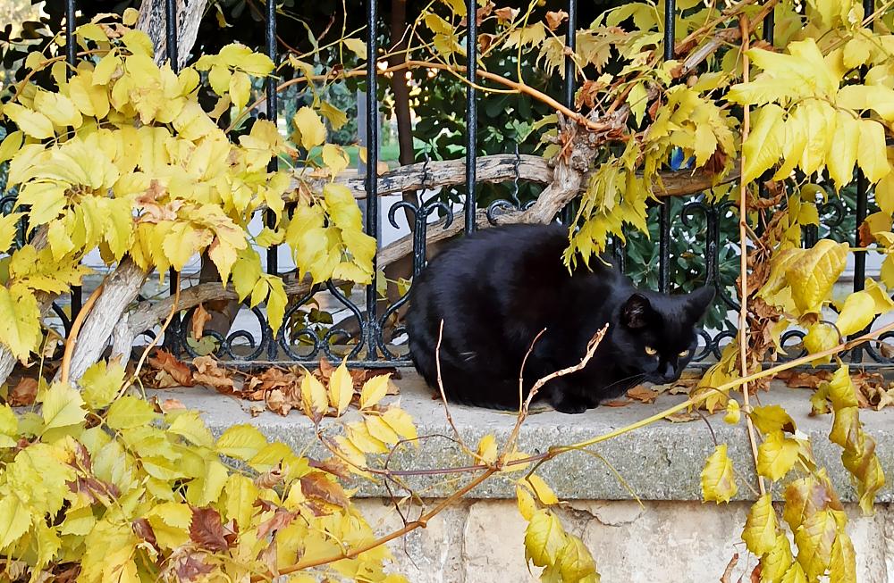zaragoza otoño fotografía gato