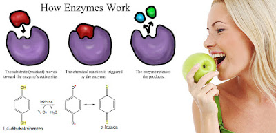 kinds of food on the human digestive enzymes and function