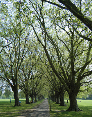 Plane Tree Avenue, Jesus Green