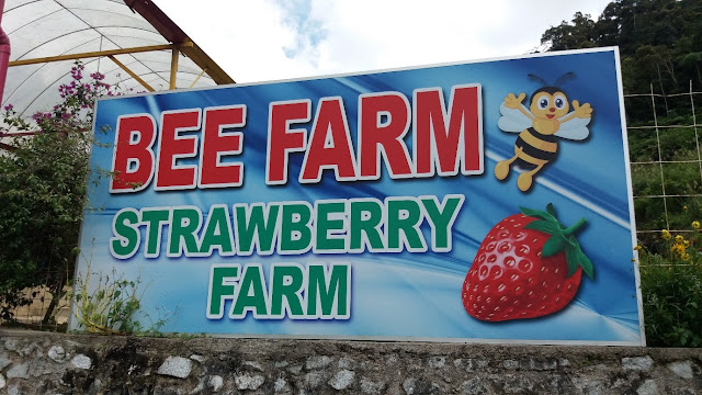 Bee Farm Strawberry Farm