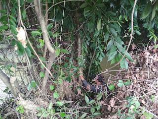 Berburu bonsai
