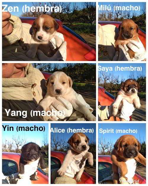 cachorros talla mediana grande