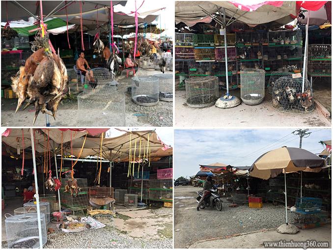 Chợ Chim Trời lớn nhất miền Tây - Thạnh Hóa (Long An)