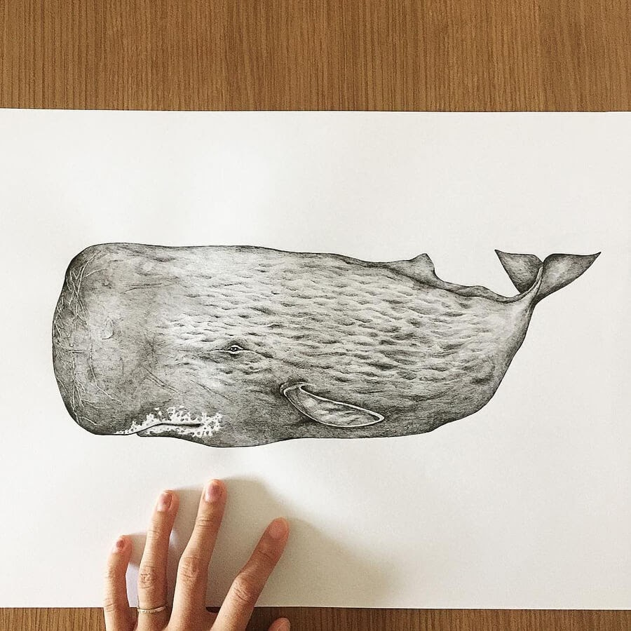 05-Sperm-Whale-Rachel-Lee-www-designstack-co