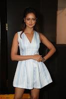Shanvi Looks super cute in Small Mini Dress at IIFA Utsavam Awards press meet 27th March 2017 14.JPG