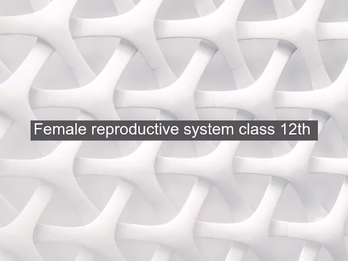 Female reproductive system class 12th
