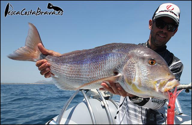 denton graphiteleader protone jlc xipi pesca costa brava jjpescasport - De los 0 a los 100 metros, SPINNING y JIGGING!