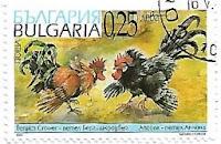 Selo Gallus gallus domesticus