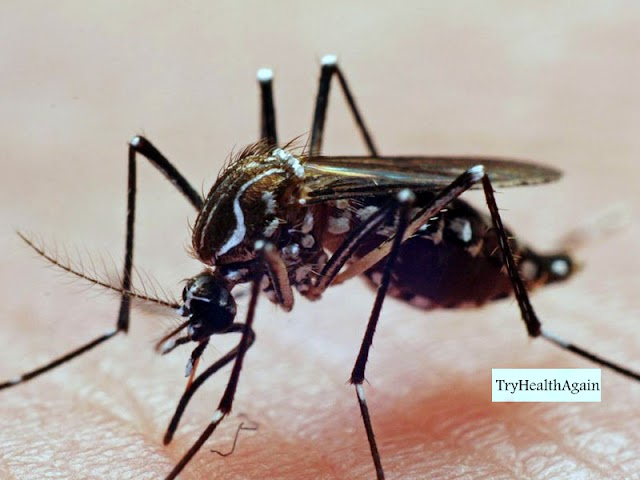 A New Research To Detect Malaria : Biomarker Discovery