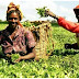 Brazil to Inject $1.1bn into Nigeria's Agriculture