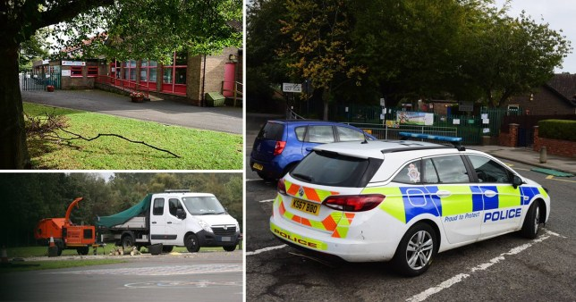 Girl, 6, killed by falling tree at primary school