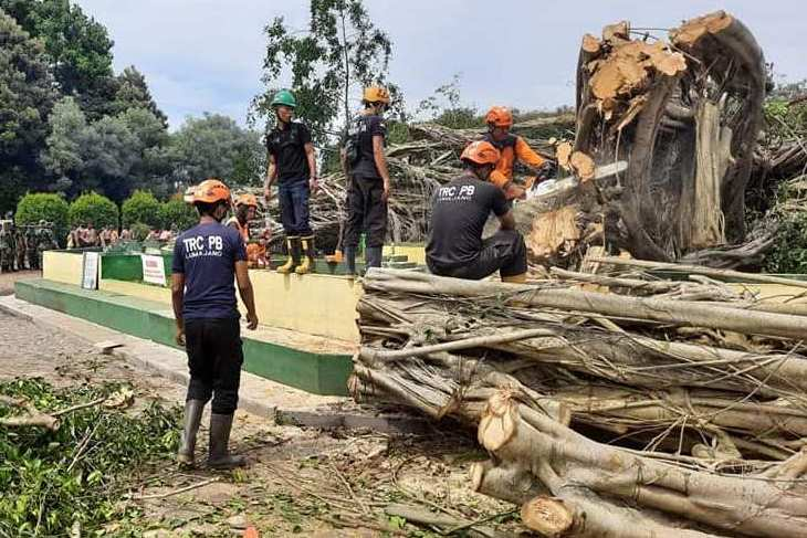 DLH Bantah Pohon Beringin Tumbang karena Proyek Penanaman Rumput
