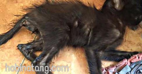 Penyebab Dan Cara Mengobati Kucing Mencret Atau Diare Secara Alami Hobinatang