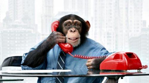 monkey_phone.jpg