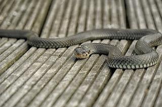 arti mimpi digigit ular bagi orang yang sudah menikah