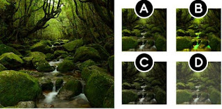 Let's see if you can match which one fits the picture on the left!