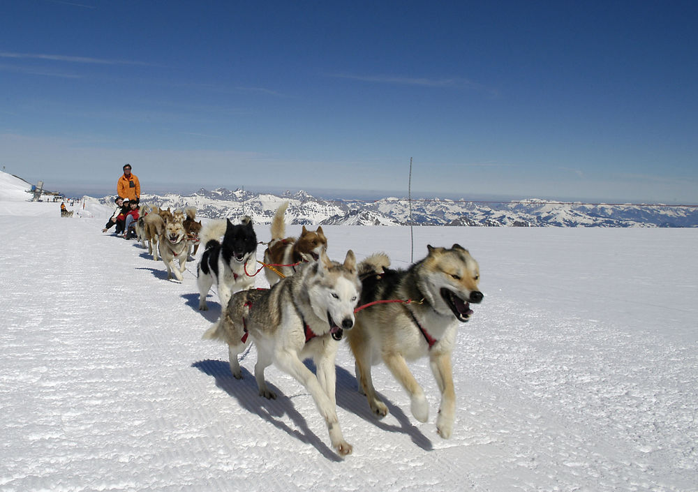 Mush!! These huskes are born and bred to run! Photo: Gstaad Saanenland Tourismus.