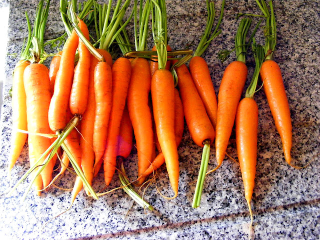Spring carrots. Photo by Loire Valley Time Travel.