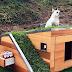 Ένα «πράσινο» σπιτάκι για σκυλάκια
