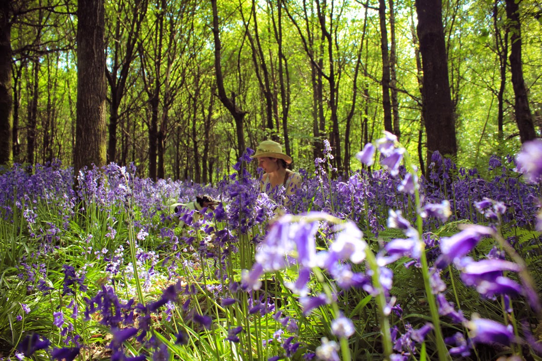 Ralphy and I in Bluebells - by A Handmade Cottage