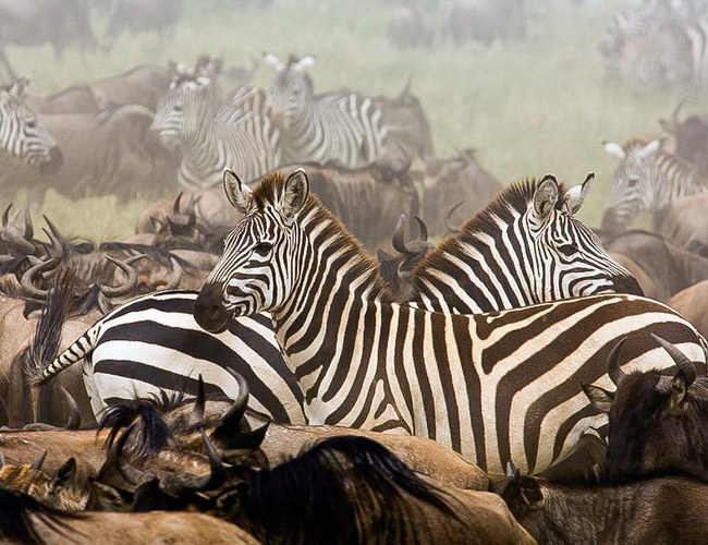 Xvlor Serengeti National Park is spectacular wildlife in Mara and Simiyu