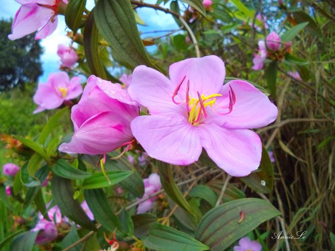 hoa thơm bên bờ Hồ thủy điện Đại Ninh