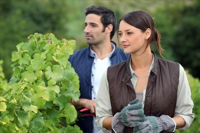 Από Πελοπόννησο και Β. Αιγαίο ξεκίνησε η ανάρτηση των δικαιούχων Νέων Αγροτών