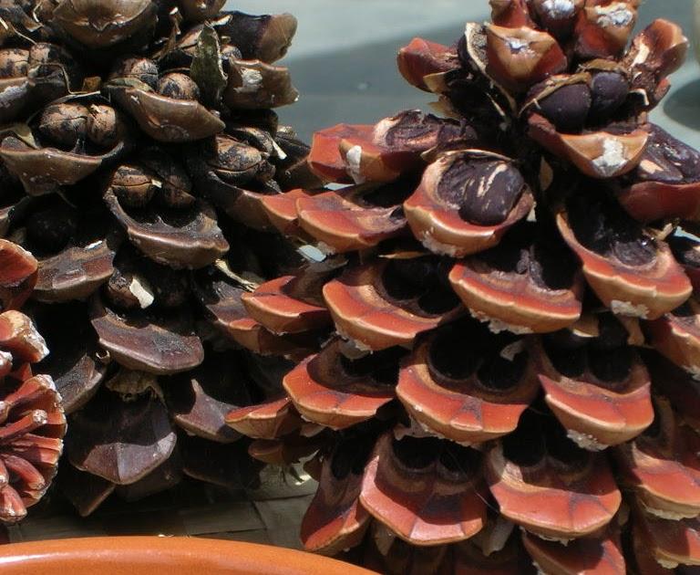 kitchen breakfast table navy blue rugs my in spain: beware: pine nut zone