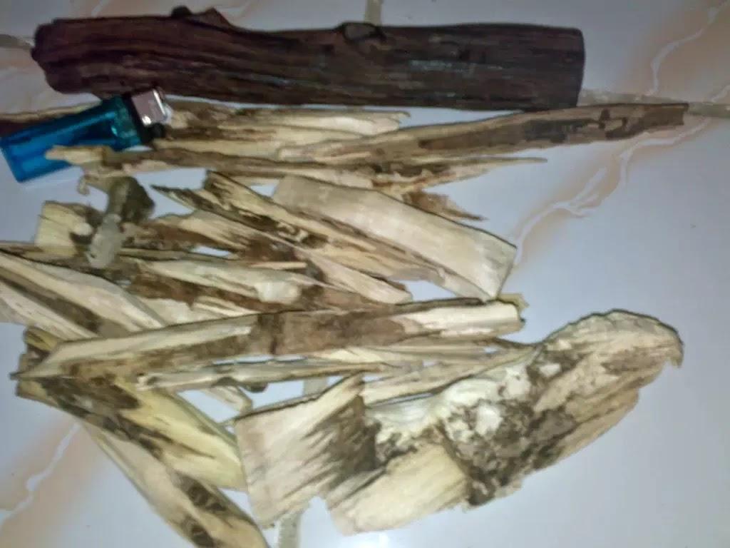 Berobat dengan kayu Gaharu