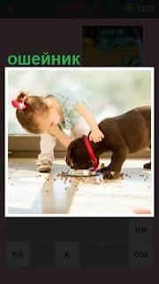 собаку в красном ошейнике кормит девочка на подоконнике