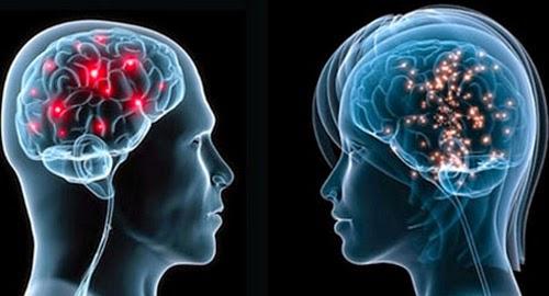 Различия между мозгом женщины и мужчины определены научными экспериментами и то, что мозг мужчины оказался больше женского на 10% совсем не говорит о том, что мужчина умнее. Просто..