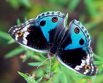 Insects pictures for kids |Funny Animal