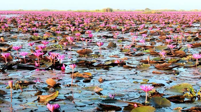 Nong Han Kumphawapi Lake