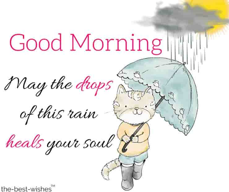 good morning wishes with rain with cute cat walking in rain