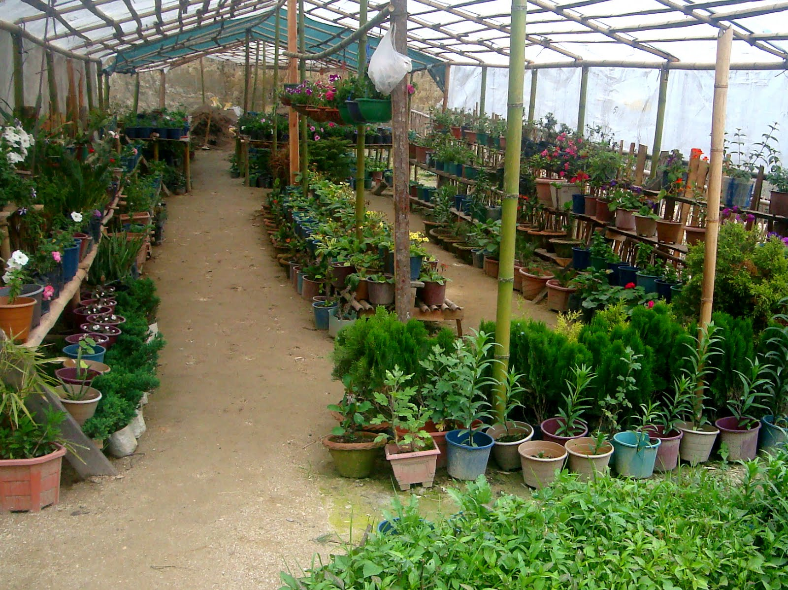 Current Agriculture Floriculture